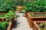 растения снижают холестерин